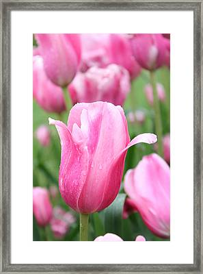 Framed Print featuring the photograph Classic Tulip by Bill Woodstock