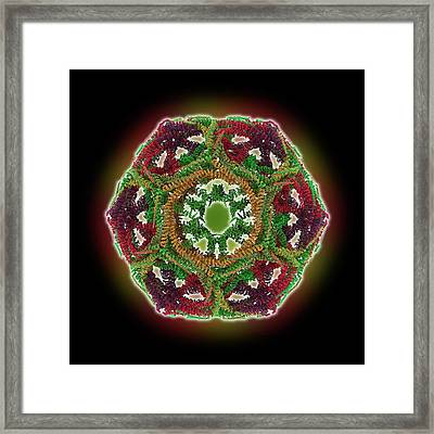 Clathrin Lattice Framed Print