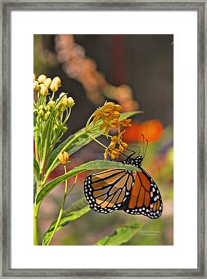 Clinging Butterfly Framed Print