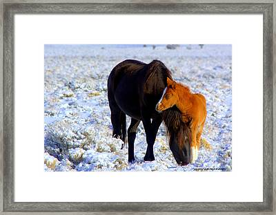 Close To You  Framed Print by Jeanne  Bencich-Nations