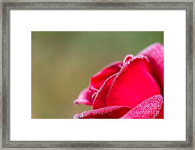 Close-up Of Red Rose With Water Drops Framed Print