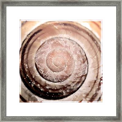 Close Up Of Sea Shell Framed Print