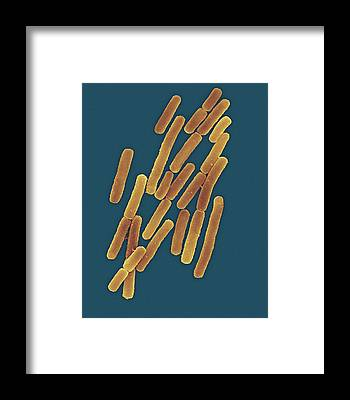 Anaerobe Framed Prints