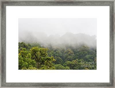 Cloud Forest Costa Rica Framed Print