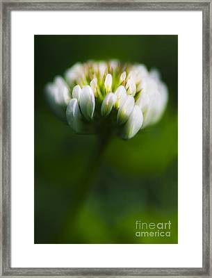 Clover Flower Macro Framed Print by Jorgo Photography - Wall Art Gallery