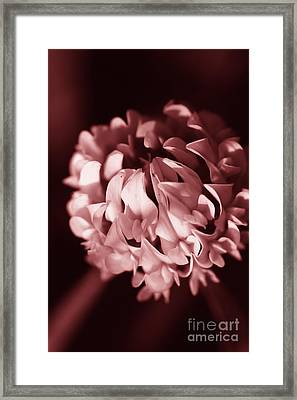 Clover Flower Framed Print