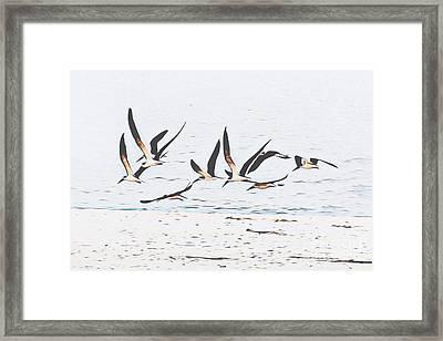 Coastal Skimmers Framed Print