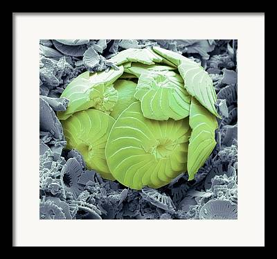 Algal Photographs Framed Prints