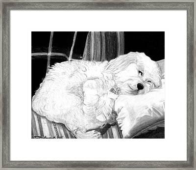 Cockapoo Dog Portrait   Framed Print by Olde Time  Mercantile