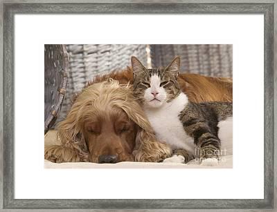 Cocker Spaniel And Cat Framed Print by Jean-Michel Labat