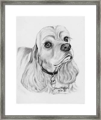 'cocker Spaniel' Framed Print by Barb Baker