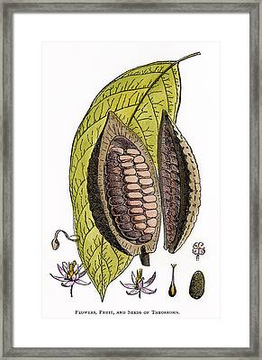 Cocoa Plant Framed Print by Granger