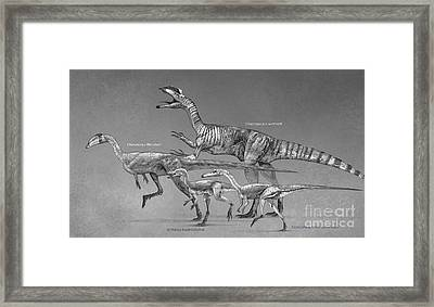 Coelophysoid Diversity From The Late Framed Print