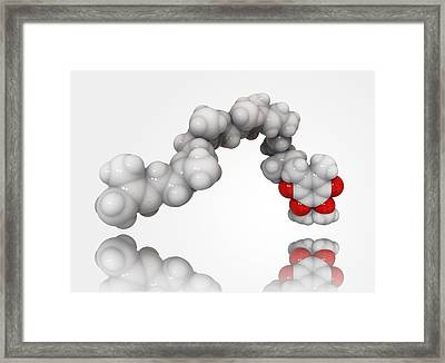 Coenzyme Q10 Molecule Framed Print by Science Photo Library