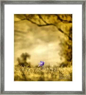 Colchicum Autumnale  Framed Print by Odon Czintos
