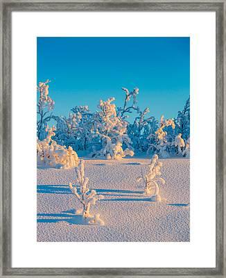 Cold Winter In Lapland Sweden Framed Print