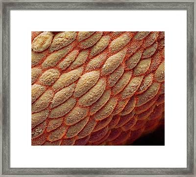 Colon Framed Print