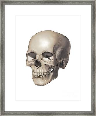 Color Illustration Of A Human Skull Framed Print