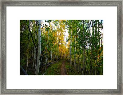 Colorado Fall Hike Framed Print by Michael J Bauer
