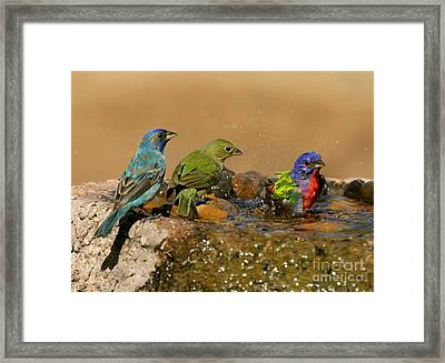 Colorful Bathtime Framed Print