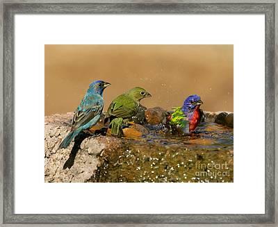 Colorful Bathtime Framed Print