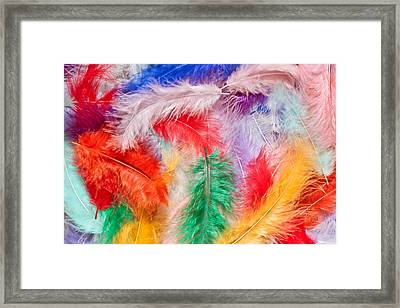 Colorful Feathers Framed Print