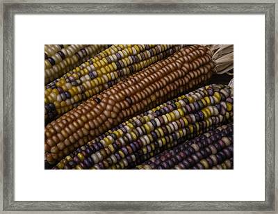 Colorful Indian Corn Framed Print by Garry Gay