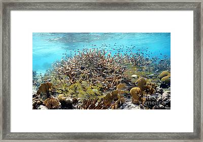 Colorful Tropical Reef Framed Print