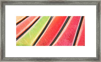 Colorful Wood Framed Print by Tom Gowanlock