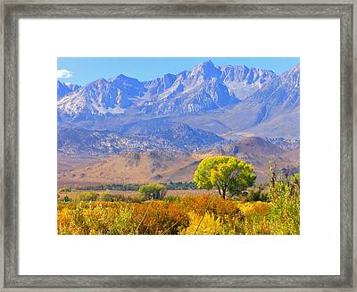 Colors Galore Framed Print