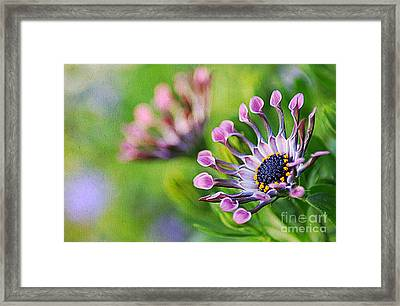 Colors Of Spring Framed Print by Darren Fisher
