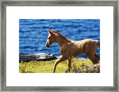Colt  Framed Print by Aidan Moran