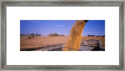 Combine Harvesting Soybeans In A Field Framed Print by Panoramic Images
