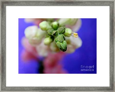 Coming To Life Framed Print by Krissy Katsimbras