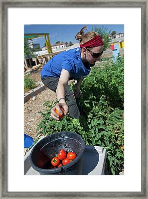 Community Garden Volunteer Framed Print