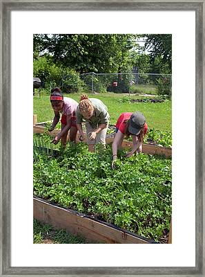 Community Garden Volunteers Weeding Framed Print