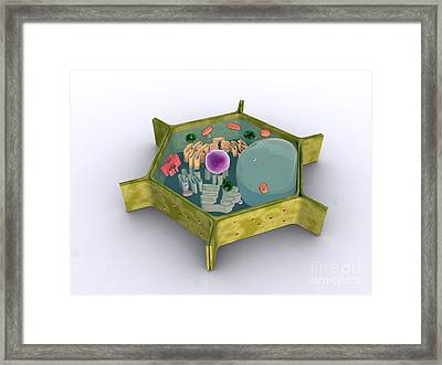 Conceptual Image Of A Plant Cell Framed Print by Stocktrek Images