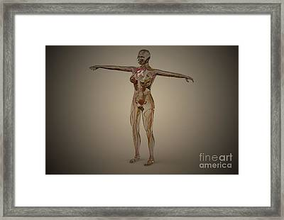 Conceptual Image Of Human Nervous Framed Print by Stocktrek Images