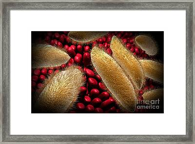 Conceptual Image Of Paramecium Framed Print by Stocktrek Images