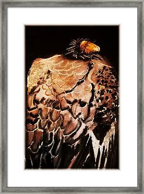 Condor Framed Print by Bruce Erdmann