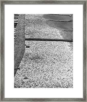 Coney Island - Brighton Beach Framed Print by MMG Archives