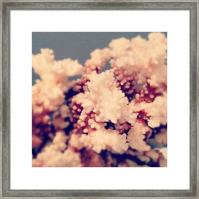 Coral Framed Print by Christy Beckwith