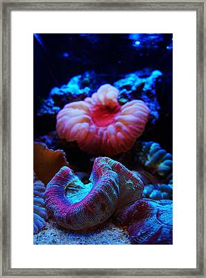 Coral Reef Creatures Framed Print by Celestial Images