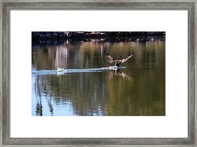 Cormorant Landing Framed Print