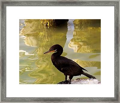 Cormorant Framed Print