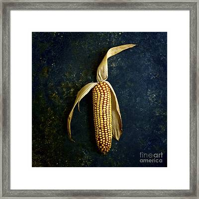 Corn On The Cob Framed Print by Bernard Jaubert