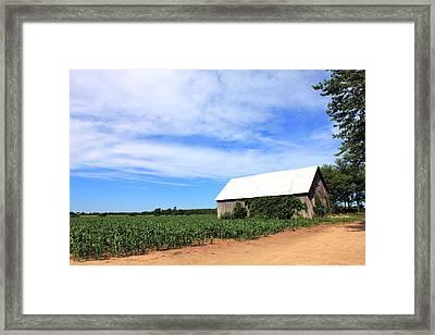 Corn Rows Framed Print by Sheryl Burns