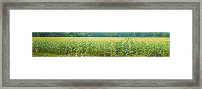 Cornfield, Cuyahoga Valley National Framed Print