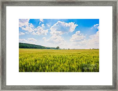 Cornfield In Tuscany Framed Print by JR Photography