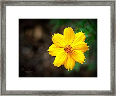 Framed Print featuring the photograph Cosmos Flower by Ludwig Keck